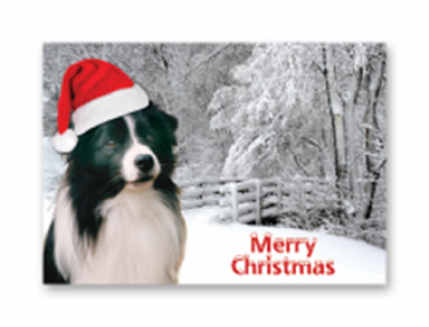 Border Collie Christmas card pack of five